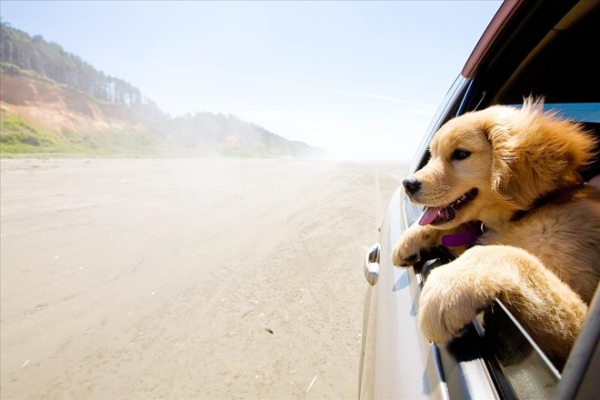 Driving with Pets and Receiving Car Accident Benefits if a Motor Vehicle Accident Occurs