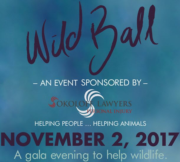 Join Sokoloff for the 2017 Wild Ball